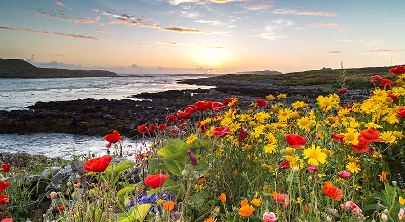 Flowers on the Path of the Fishermen at Sunset