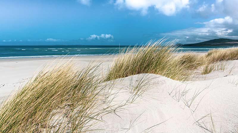 Sea Grass Killinallan Point
