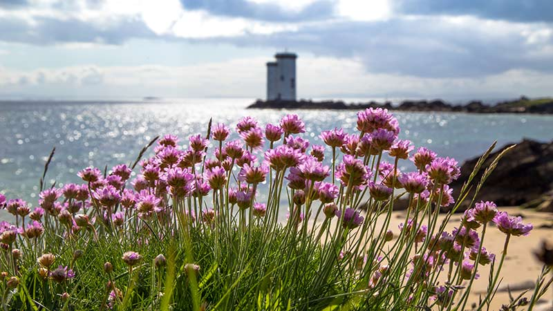 View from Kilnaughton Beach towards Carraig Fhada Lighthouse with Sea pinks in the Foreground