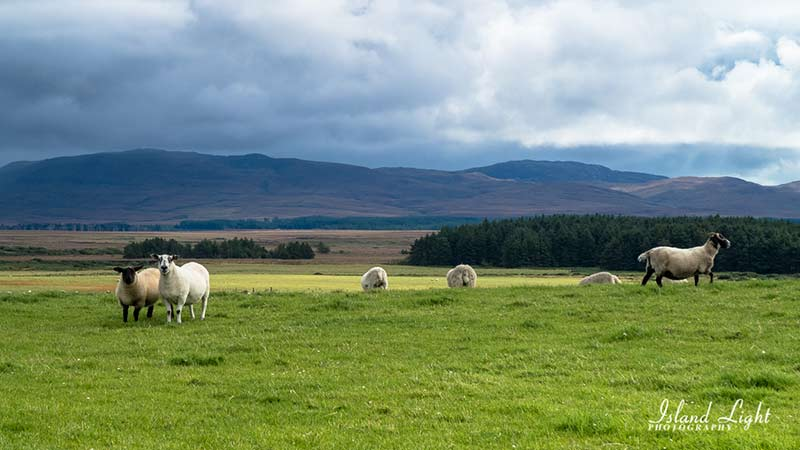 View from Laggan Estate track over central Islay